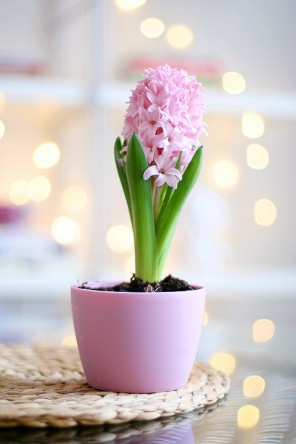 flor-linda
